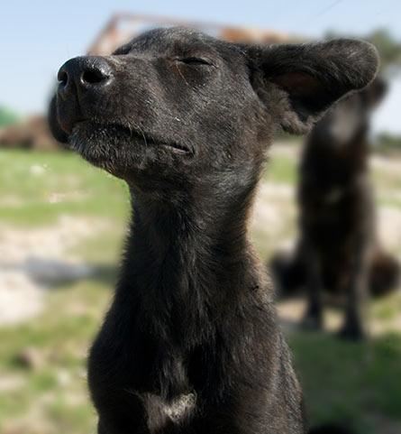 Dog in Turkey