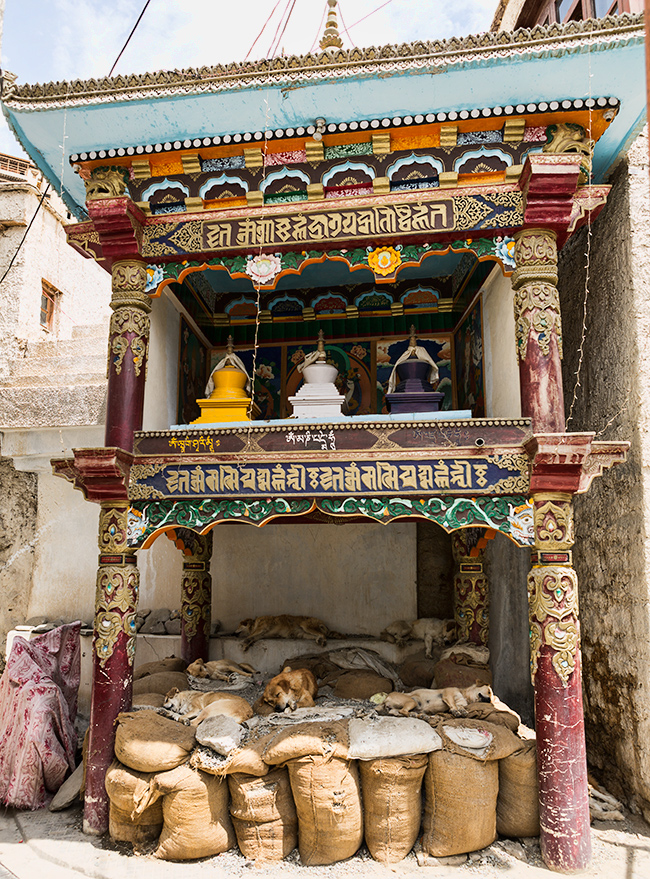 The Temple of the Dogs  Leh, India