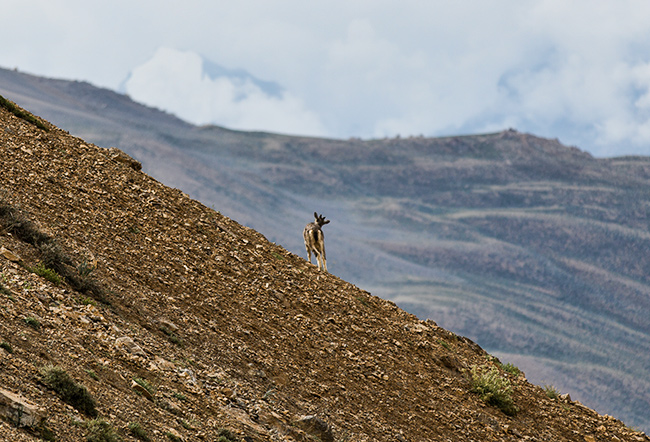 Trekking in Spiti Valley