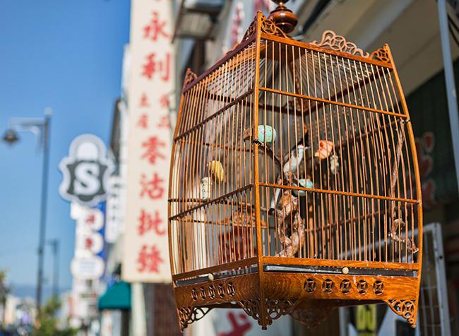 Bird cage in Georgetown