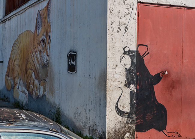 Cat and Mouse in Georgetown