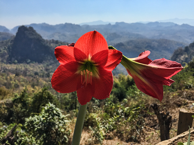 Flower in the Mountains