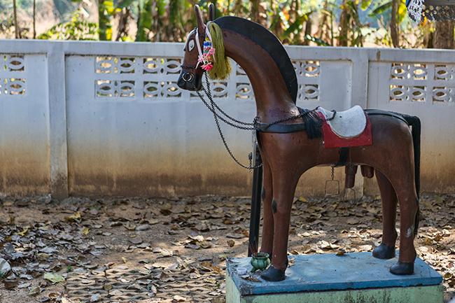 Big penis horse