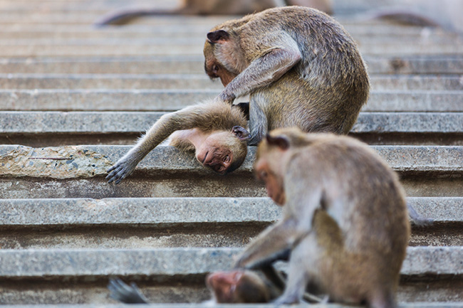The Monkeys in Prachuap Khiri Khan
