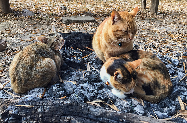 Twin Hut cats at the fire in the morning