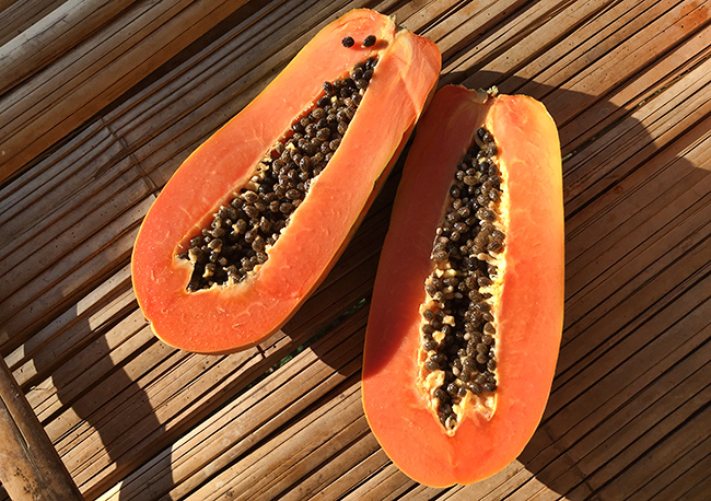 Afternoon Papaya