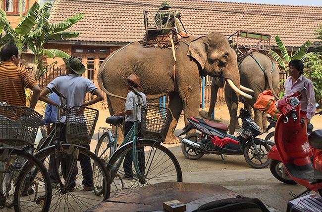 Elephants at Lak Lake