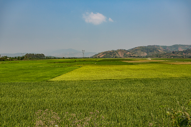 Rice fields close to Lak Lake