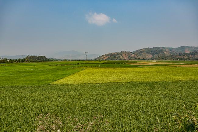 Rice fields close to Lak Lake