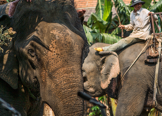 A mahout on an Elephant