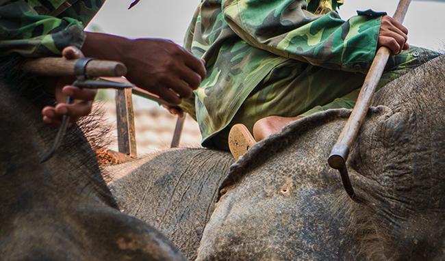 A mahout on an Elephant