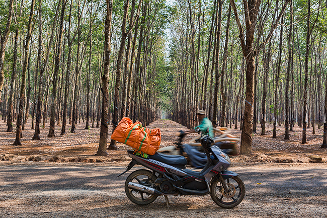 Rubber trees in the back - and my bike - and traffic!