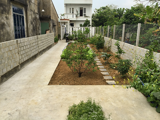 The yard with vegetable garden at the Homestay