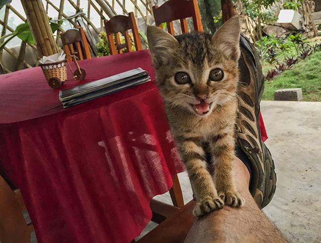 Cat lift