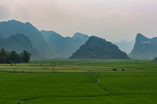 And haze over the rice fields down in the valley