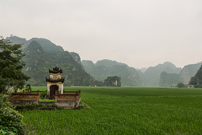 Grave in the rice field